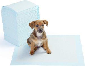 mejores empapadores de entrenamiento para perros